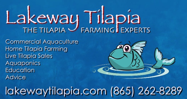 Backyard Tilapia Farming - How to build a tilapia pond